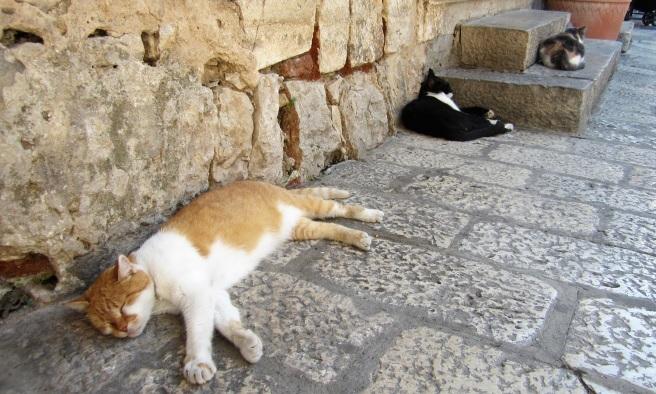 Dubrovnik Kulttuurikuuri (4)